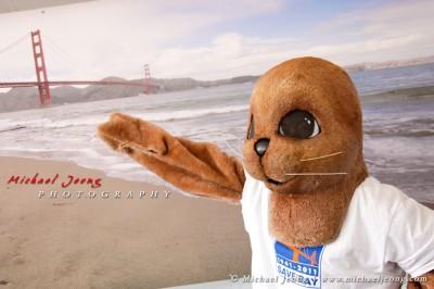 Golden Gate Bridge 75 (2)